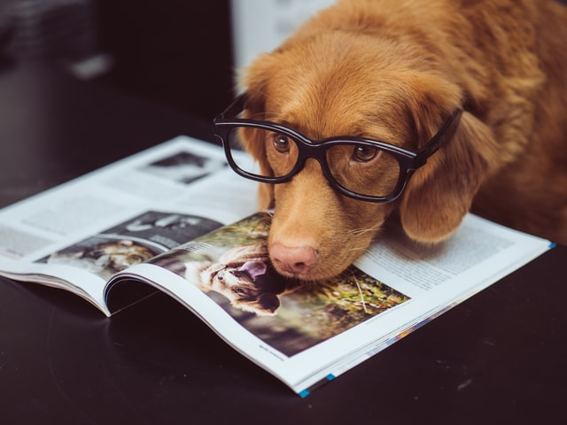 schrijven vanuit perspectief dier of object is antropomorfisme